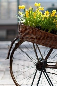 bike with daffodils