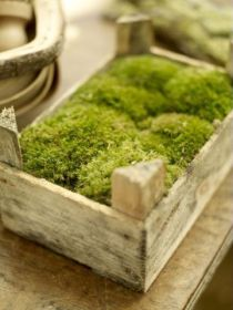 moss in crate