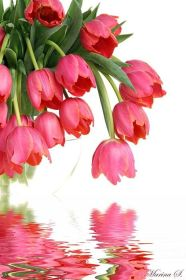 tulips hanging