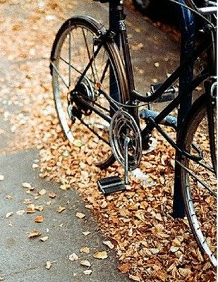 bike and leaves