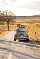 bug-on-road