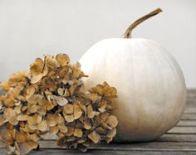 hydrangea-and-pumpkin
