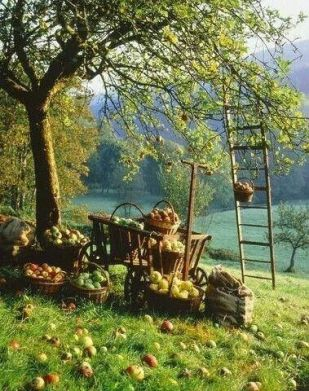 autumn orchard
